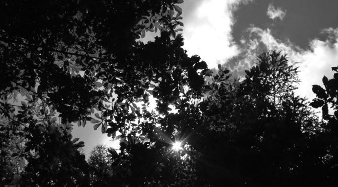 tree and leaf image